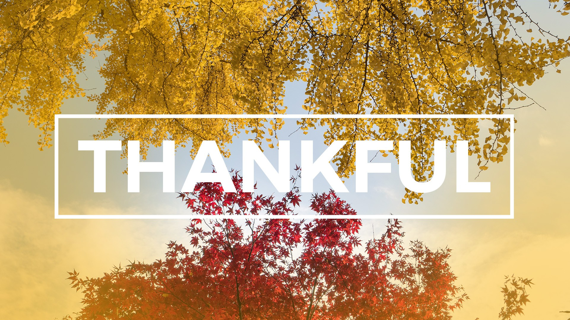 Thankful Happy Thanksgiving Day Images